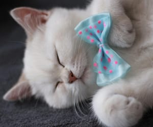 adorable, animals, and bow tie image