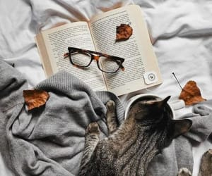 autumn, book, and cat image