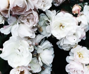 blossom, flowers, and white image