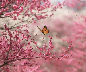 pink, butterfly, and flowers image