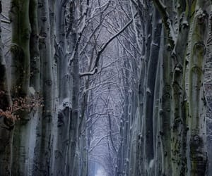 czech republic, snow, and forest image