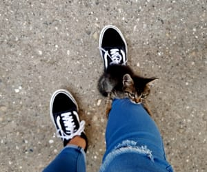 cat, funny, and lovely image