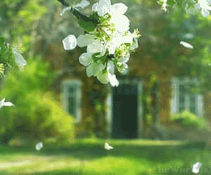 gif, spring, and tumblr image