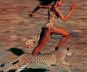 aesthetic, animal, and cheetah image
