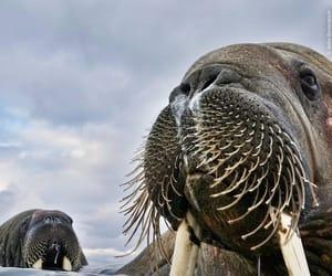 animals, arctic, and norway image