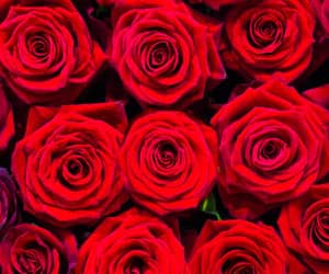 background, red, and roses image