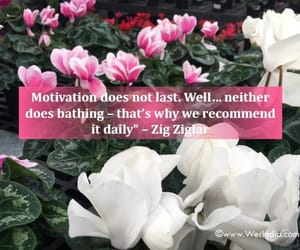 motivation, healthylife, and stay motivated image