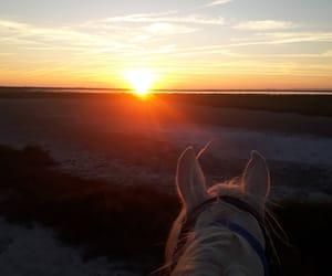 beautiful, horse, and camargue image