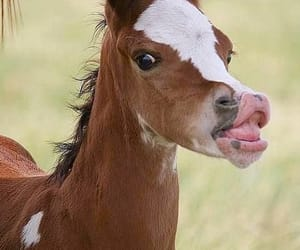 baby animal, cutie, and horse image