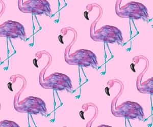 aesthetic, background, and flamingo image