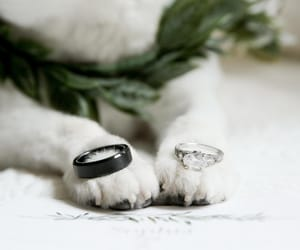dog, photographer, and married image