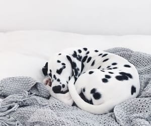 aesthetic, animals, and white image