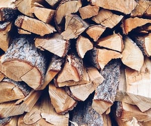 autumn, wood, and fall image
