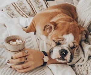 animal, dog, and coffee image