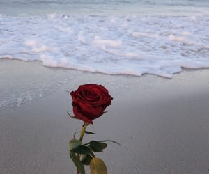 rose, beach, and sea image