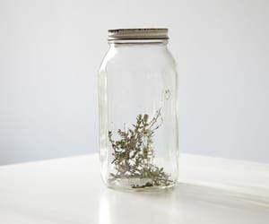vintage, jar, and photography image