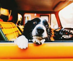 car, dog, and yellow image