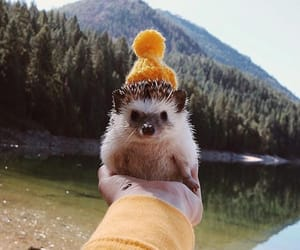 animals, hedgehog, and mountians image