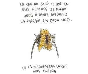 sunflower, frases, and flowers image