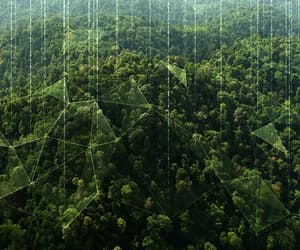 forest, hills, and string image