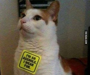 funny cat animals image