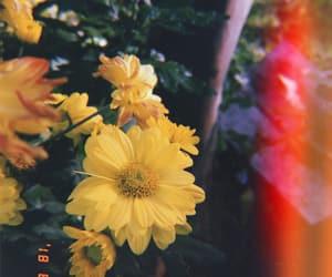 amarillo, bonitos, and colombia image
