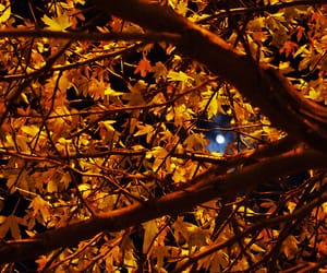 autumn, leaves, and moon image