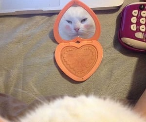 cat, mirror, and cute image