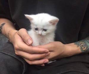 cat, animal, and tattoo image
