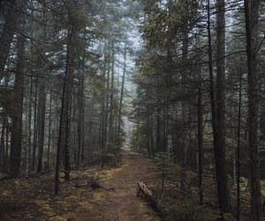 forest, Maine, and nature image