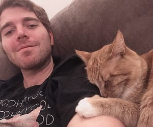cats, cheeto, and cute image