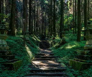 calm, forest, and green image
