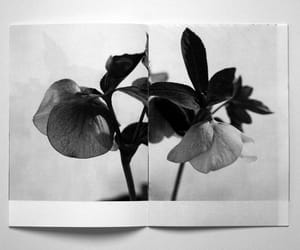 flowers, book, and black and white image