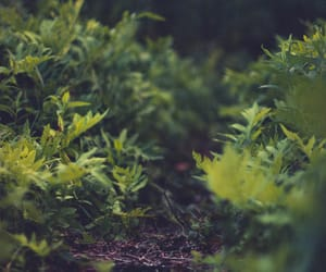 greenery, vertical landscape, and plantcore image