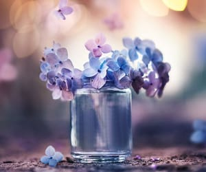 blue, flower, and glass image