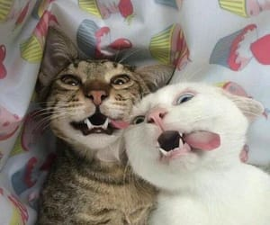 cat, funny, and animals image