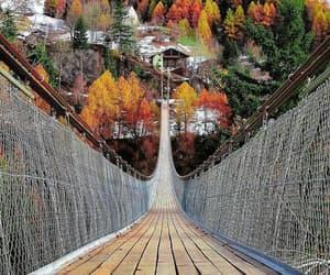 bridge, fall, and autumn image