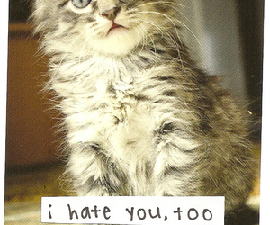 cat, hate, and cute image