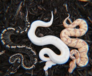 snake, animal, and black image