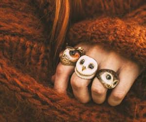 autumn, fall, and owl image