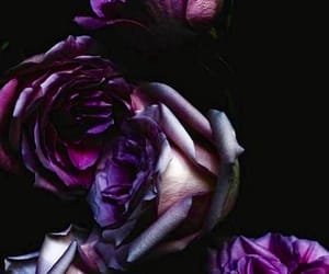 purple and dark beauty image