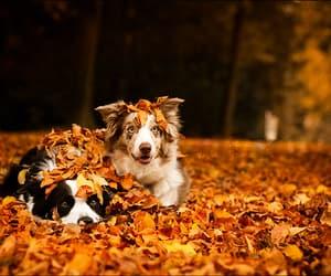 dog, autumn, and fall image