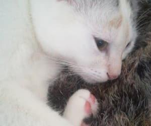 beautiful, kitten, and molly image