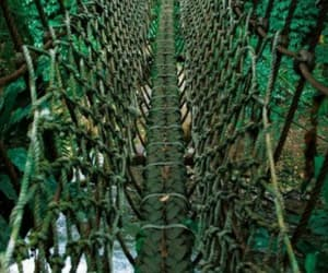 green, nature photography, and rope bridge image