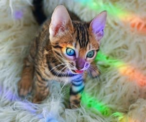 cat, color, and gato image