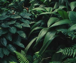 green and jungle image