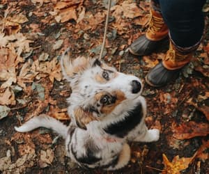 autumn, animal, and dog image