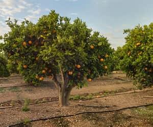 crop, nature, and orange image