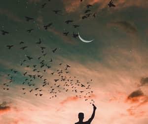 alone, bird, and sunset image