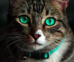 belleza, cat eyes, and cats image